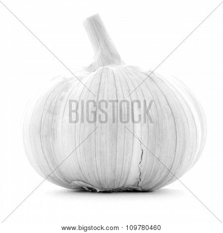 Clean clear single whole garlic bulb isolated on white