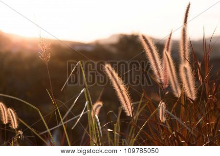 Blowing Flowering Grass