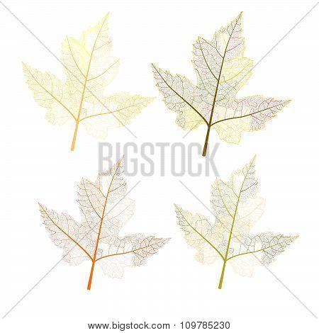 leaves autumn colors