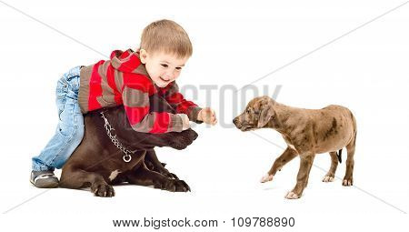 Child playing with the dog and puppy