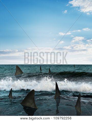 Sharks in sea