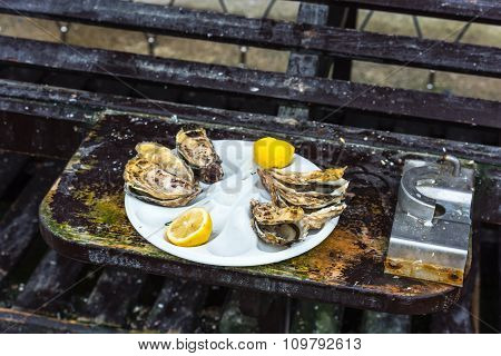 Half A Dozen Oysters On A Plastic Plate