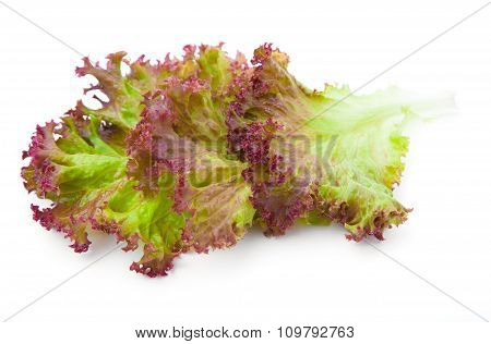 Lettuce. Salad Leaves Isolated On White Background