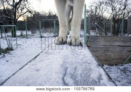 Paws On A Board