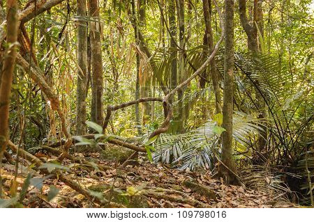 Thicket from tropical knotty trees and bushes India
