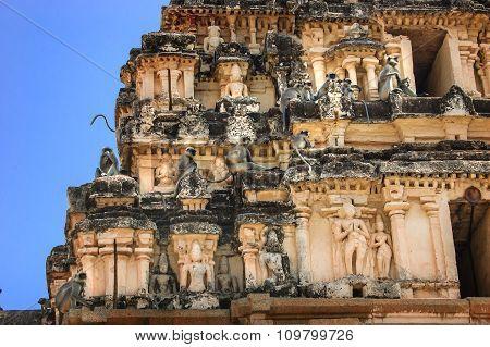 Gray Langurs Are Sitting At Virupaksha Temple In Hampi, India.