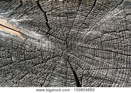 Gray Sawed Wood Log End Natural Background
