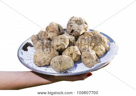 Many White Truffles From Piedmont On Steel Tray