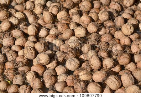 Autumn Fruits, Walnut, Southern Bohemia