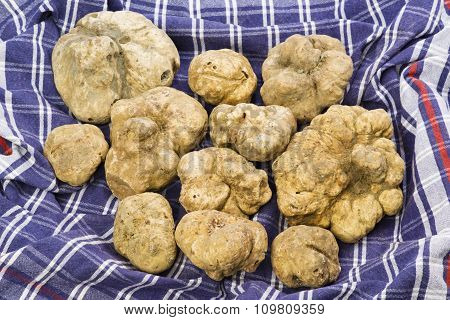 Many White Truffles From Piedmont On Cloth