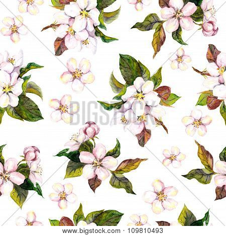 Seamless floral pattern with watercolour drawing - pink apple and cherry flower blossom on white bac