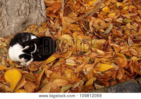 Cats And Fall