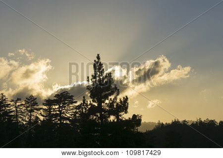 Backlit Forest As Setting Sun Catches On Passing Clouds