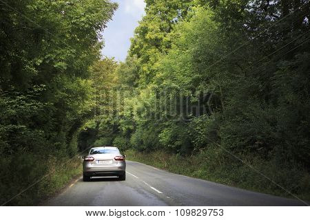 Car goes on the road in tunnel of trees.
