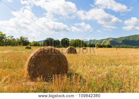 Haystacks in the field in autumn day. Far East, Russia.