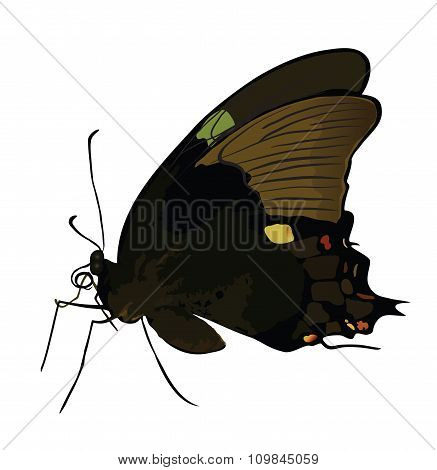 Black butterfly with colored spots isolated.