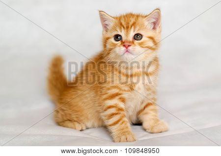 Kitten sunlight.