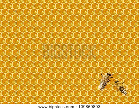 Close up view of the working bees on honey cells