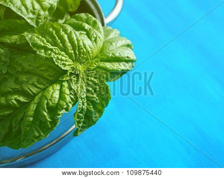 Fresh basil leaves on blue background