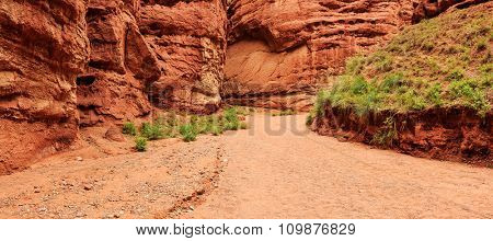 road with some green in valley of red sandstone