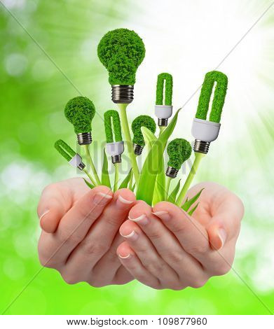 Eco energy light bulbs in hands on natural green background
