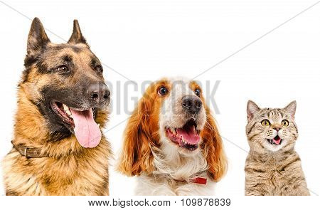 Portrait of pets closeup isolated on white background