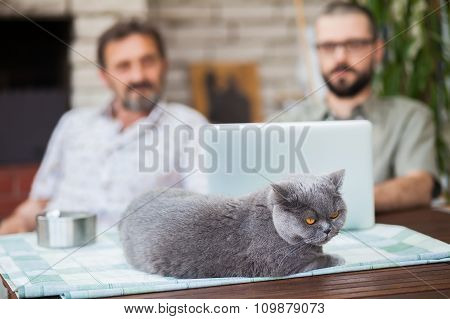 Men Using Laptop With The Company Of The Cat