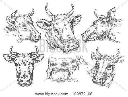 hand-drawn cow. sketch
