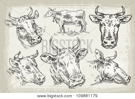 collection of hand-drawn cows. vector illustration