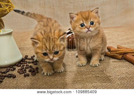 Two Little Kitten And Ingredients For Coffee