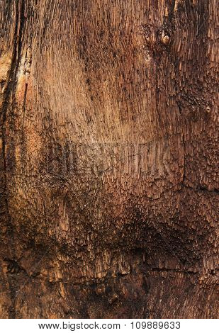 Closeup Of Textured Colorful Petrified Tree Trunk As A Background