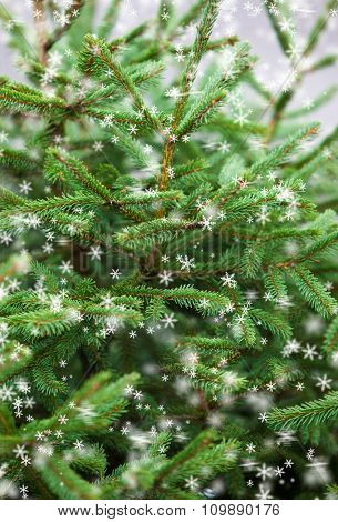Green prickly branches of a Christmas tree and snowflakes.