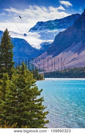 Rocky Mountains of Canada on Lake Bow. Glacier Crowfoot glows in bright sunlight. The lake is surrounded with rocks and fir-trees