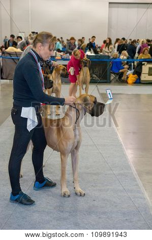 MOSCOW, RUSSIA - NOVEMBER 1, 2015: Exhibitors showing their pets during International Dog Show CACIB-FCI on November 1, 2015 in Moscow, Russia.