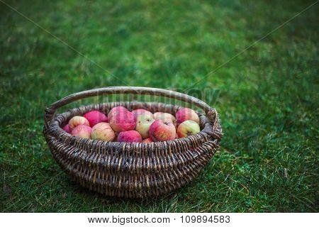 Bag of apples