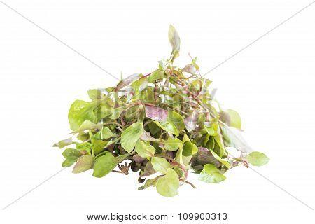 Red Green Fresh Watercress Salad Ingredient