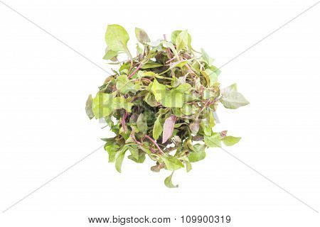 Red Green Watercress Salad Ingredient Top View