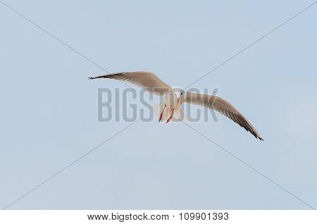 Seagull flying among blue sky