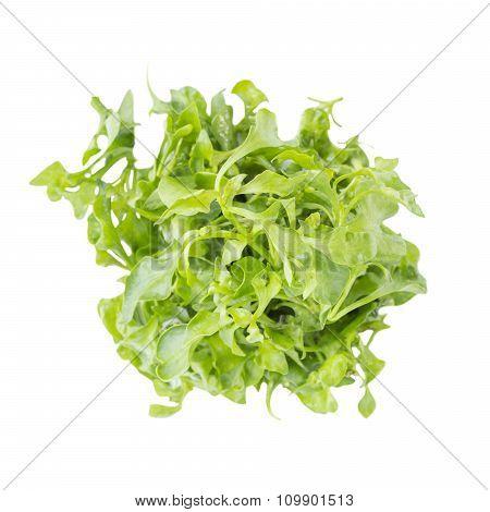 Fresh Green Watercress Salad Ingredient On Top View