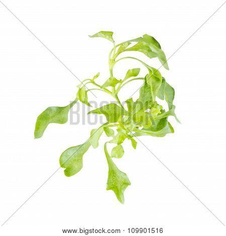 Fresh Leaf Green Watercress Salad Ingredient