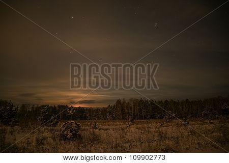 Spruce Forest Night Snow Stars