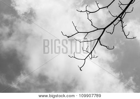 Tree Branches Against The Sky(black And White Theme)