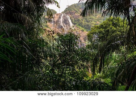The Waterfall In The Jungle