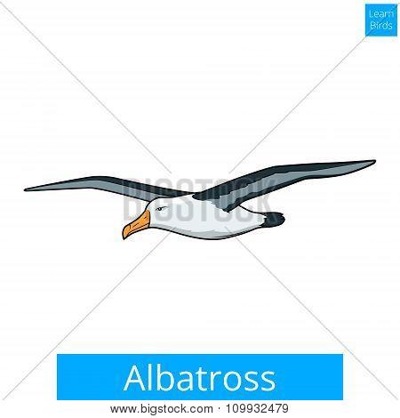 Albatross learn birds educational game vector