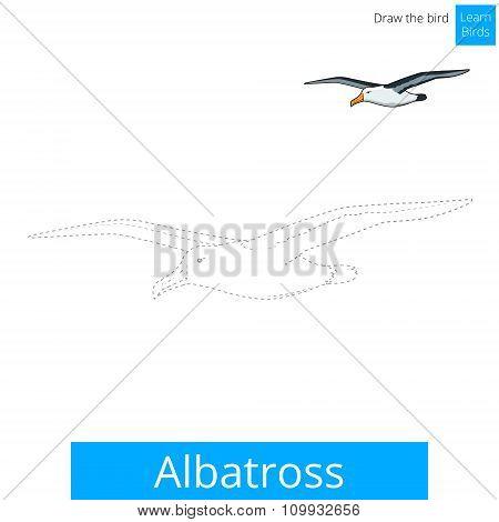 Albatross learn birds coloring book vector
