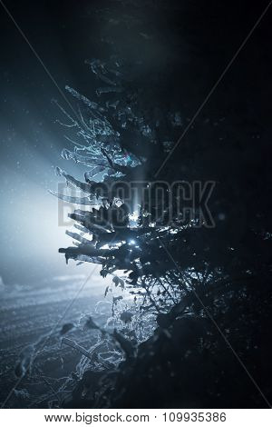 tree covered with fresh snow at winter night, back light with lens flare