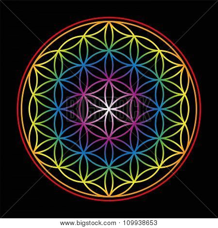 Flower Of Life Bright Glow Colors Black