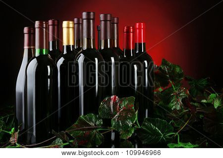 Wine bottles with grapevine on red background