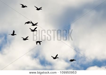 Flock Of Ducks Silhouetted In A Cloudy Sky As They Fly