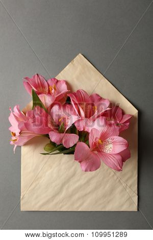 Pink alstroemeria in envelope on grey background
